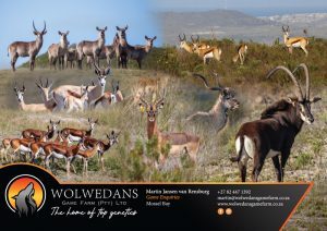 wolwedans catalogue page.cdr